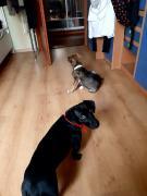 Выгул собак и котов. Передержка животных. Няня(систр) для животн